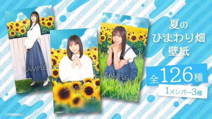 『夏のひまわり畑と乃木坂ちゃん~花言葉は「あなただけを...」~』