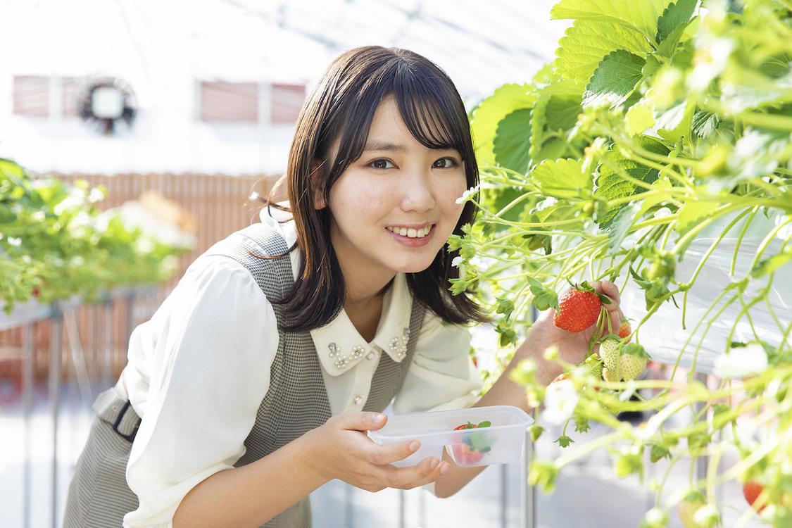 沢口愛華、いちごの食べ比べを体験! 『東海ウォーカー』登場